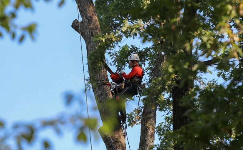 Reasons Why It Is Important To Hire The Best Tree Services Specialist