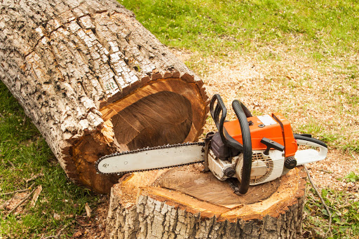 3 Common Services That You Can Obtain From a Tree Service